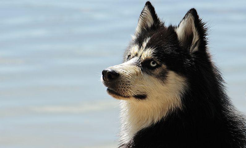 A kiskutyánk megmentője, avagy a hipoallergén kutyatáp