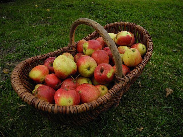 Cukrozott üdítők helyett, 5 literes almalé !